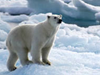 The Arctic: Find out more, click here